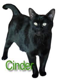 Cinder the blind cat. Cinder Main We had no idea blind Cinder was pregnant ...
