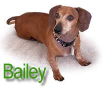 Bailey Main