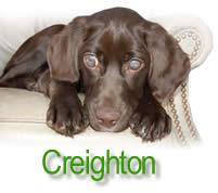 Creighton the blind puppy