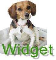 Widget Main