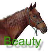 Beauty Main