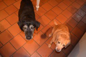 Stella and Darla 1