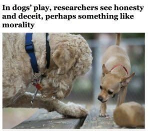 Washington Post article screenshot