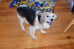 Esther barking