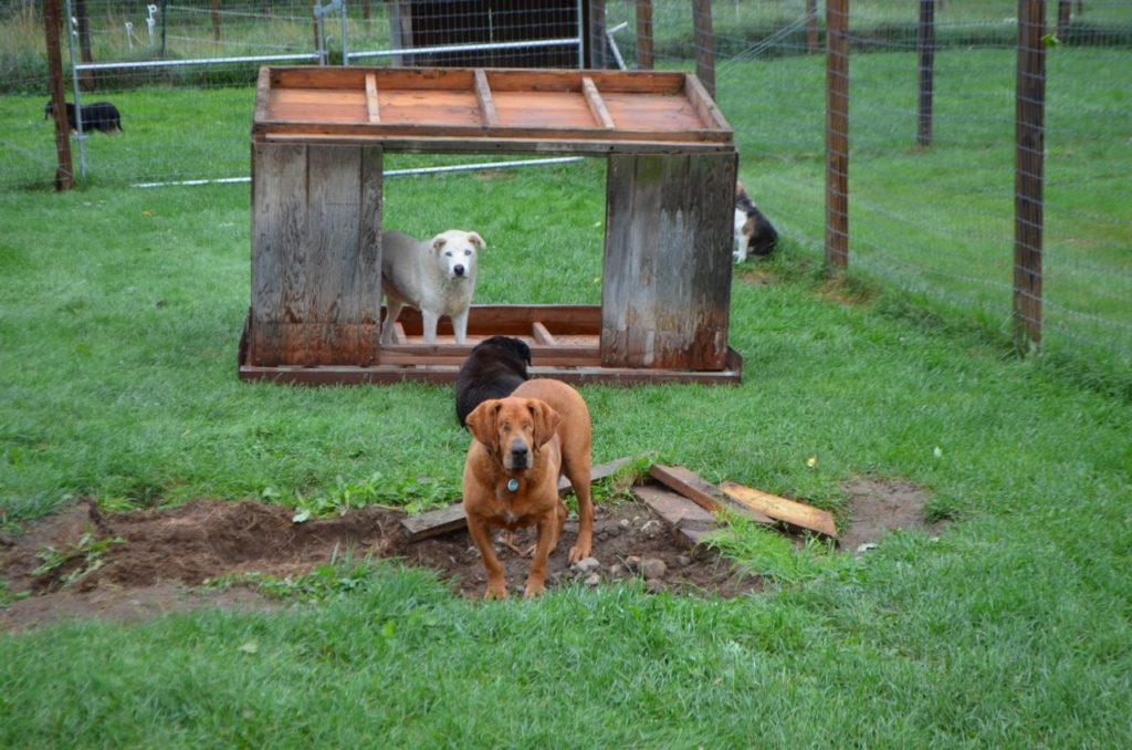 Dog house upside down 1