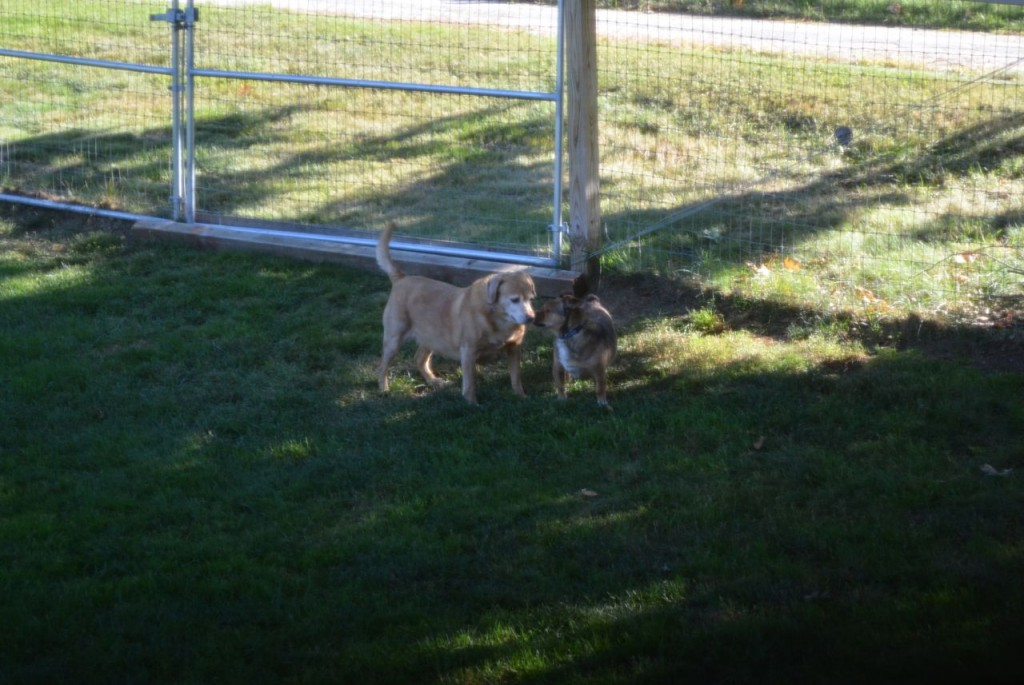 Darla with Bugsy 3