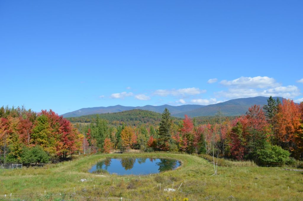 Pond with fall colors in Sept