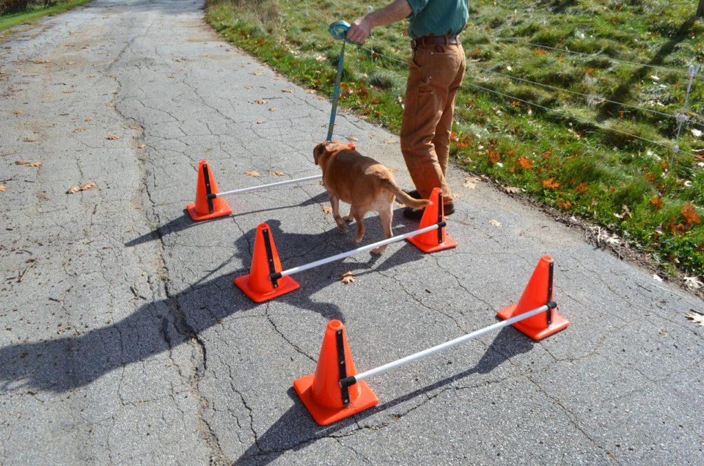 Darla going over cone poles