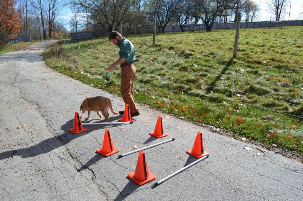 Darla with cone poles down