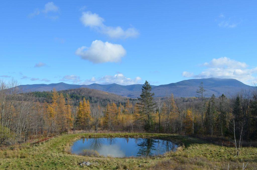 Pond View on Halloween