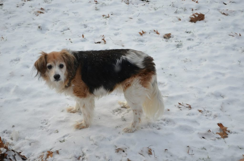 Esther in snow