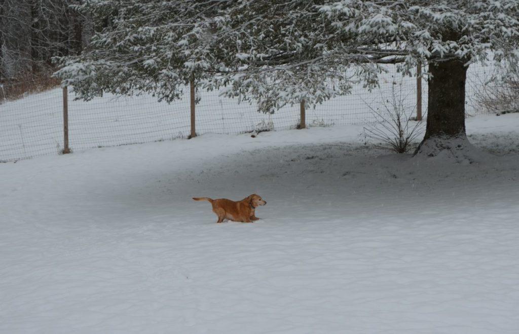 Darla in snow 1
