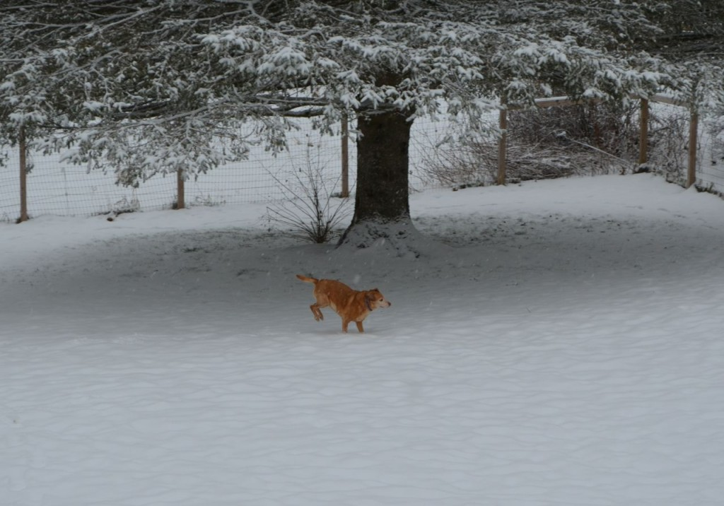 Darla in snow 2