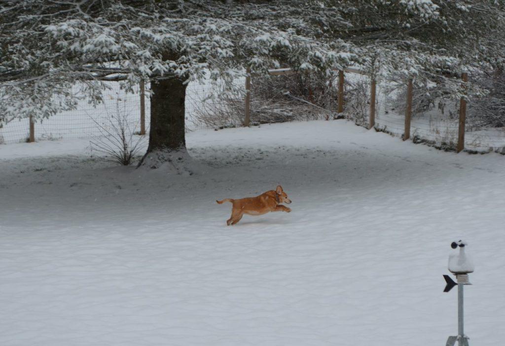 Darla in snow 3