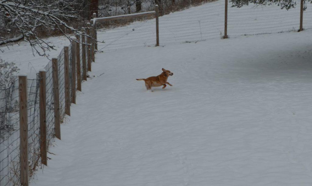 Darla in snow 4