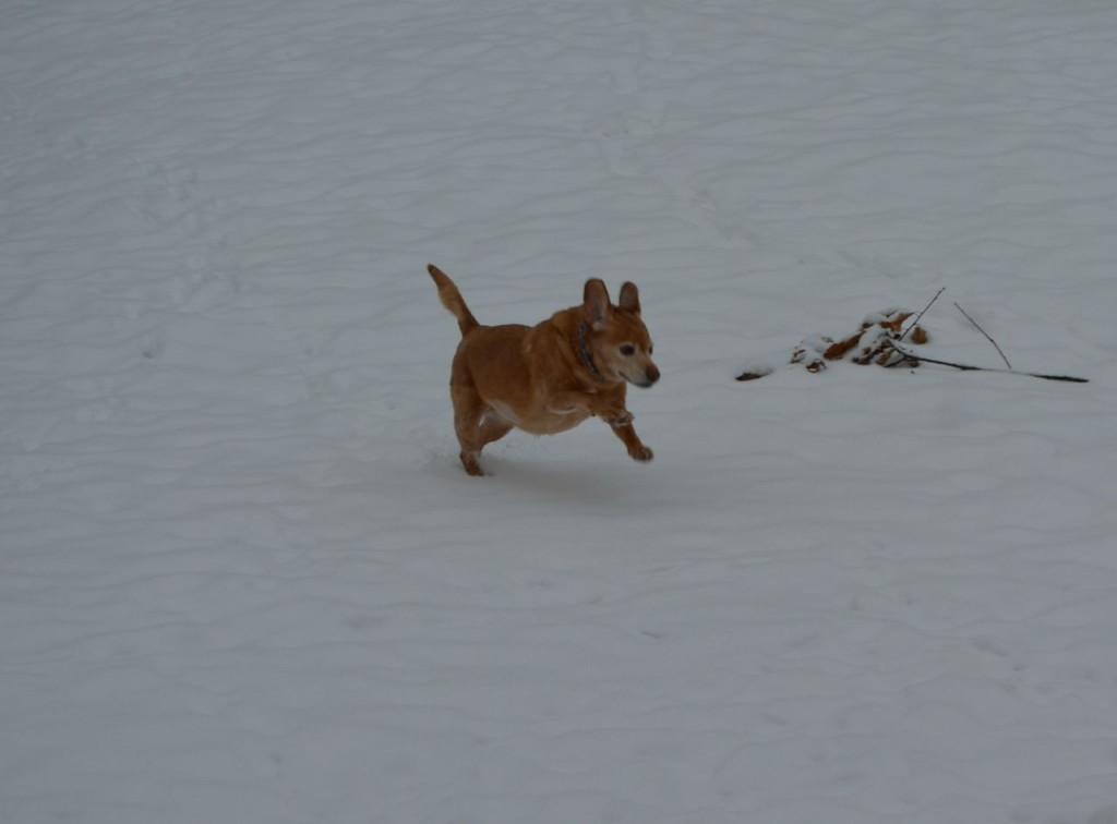 Darla in snow 5
