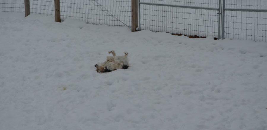 Snow Bunny 2
