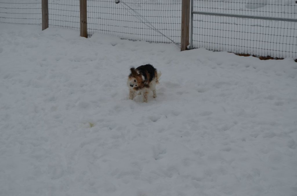 Esther rolling in snow 6