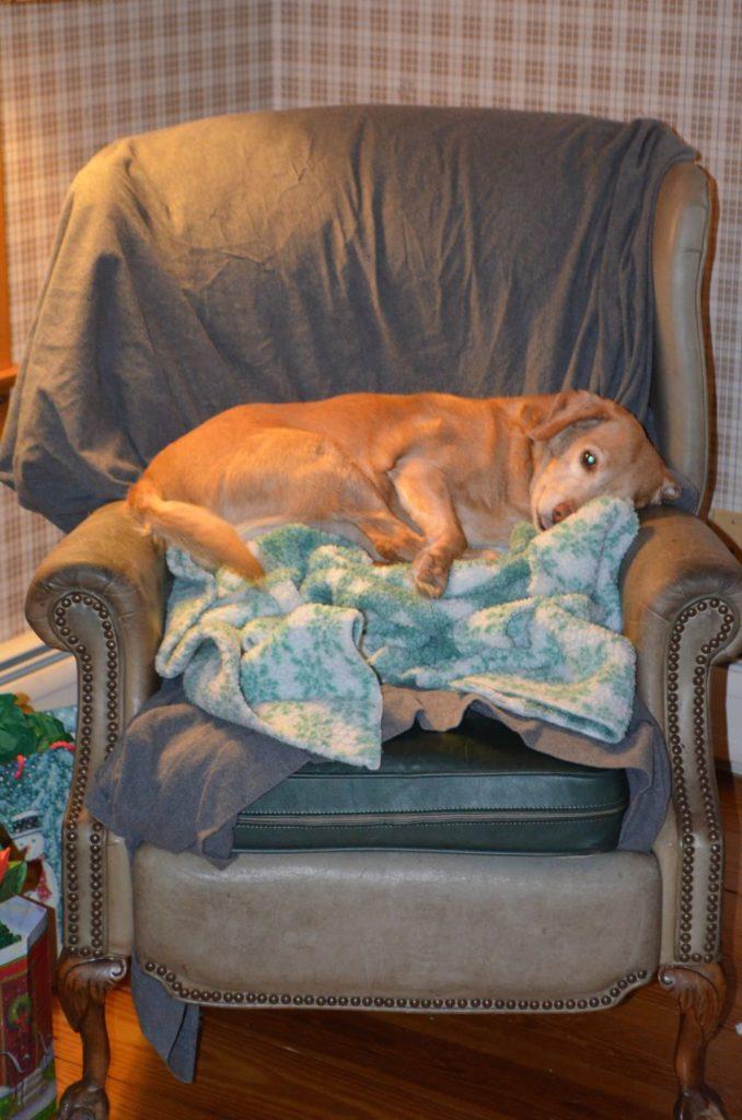 Darla on chair on Jan 2