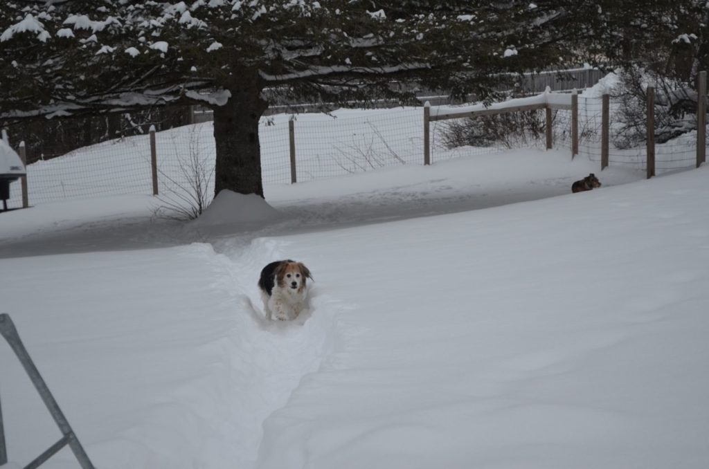 Esther on snowy trail