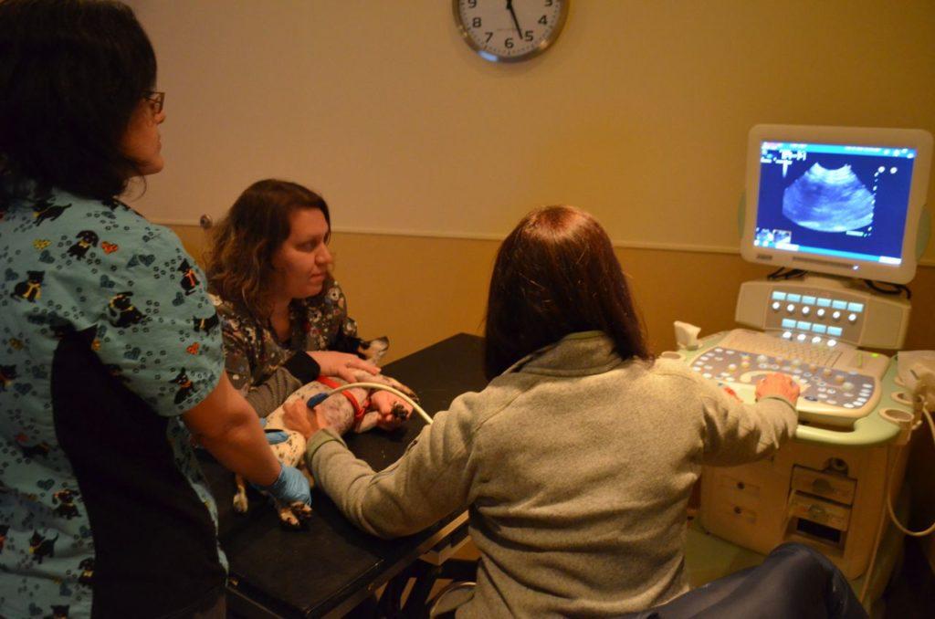 Taco ultrasound