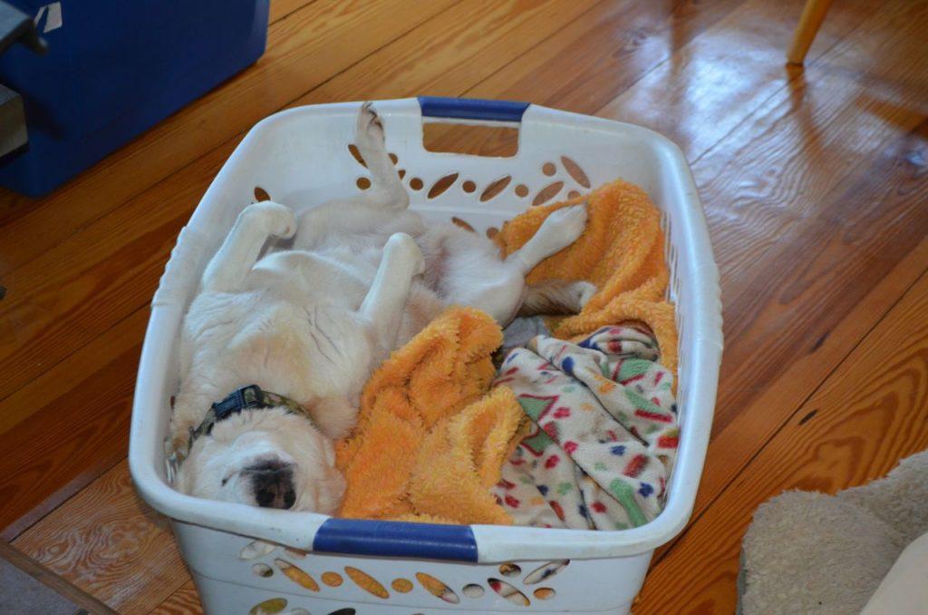 Aurora in basket for newsletter