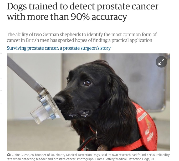 Guardian screenshot of dog prostate detection story