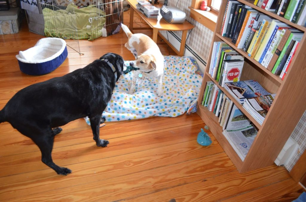 Tanner and Stella 2