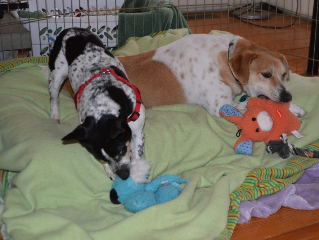 Tanner and Taco with toys 2