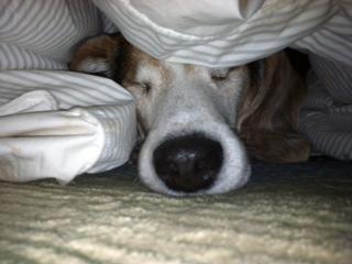 Billy under blanket