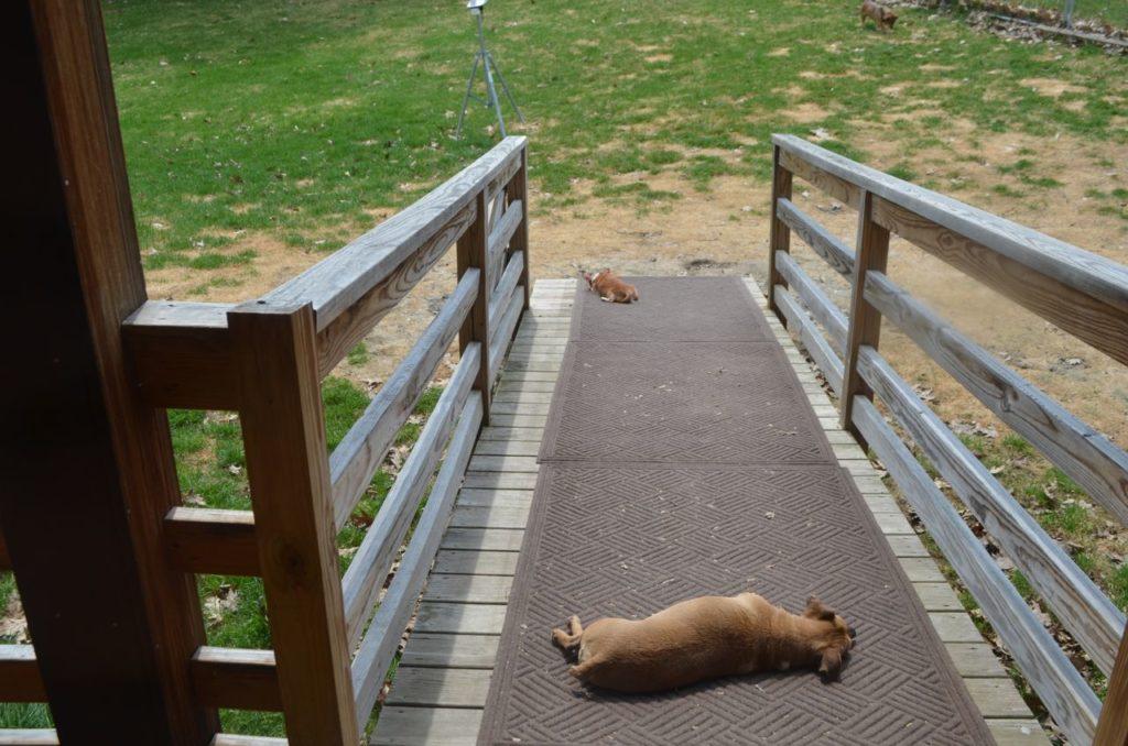 Wilbur on ramp 2
