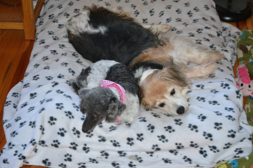 Mabel and Esther on bed July 11