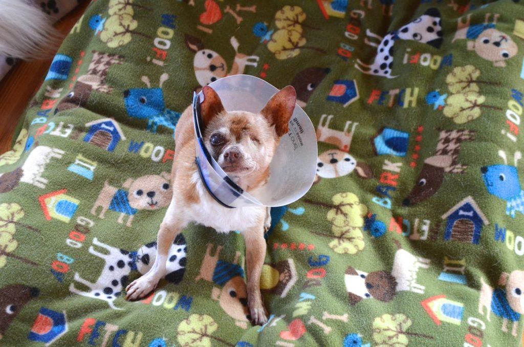 Wilbur with cone