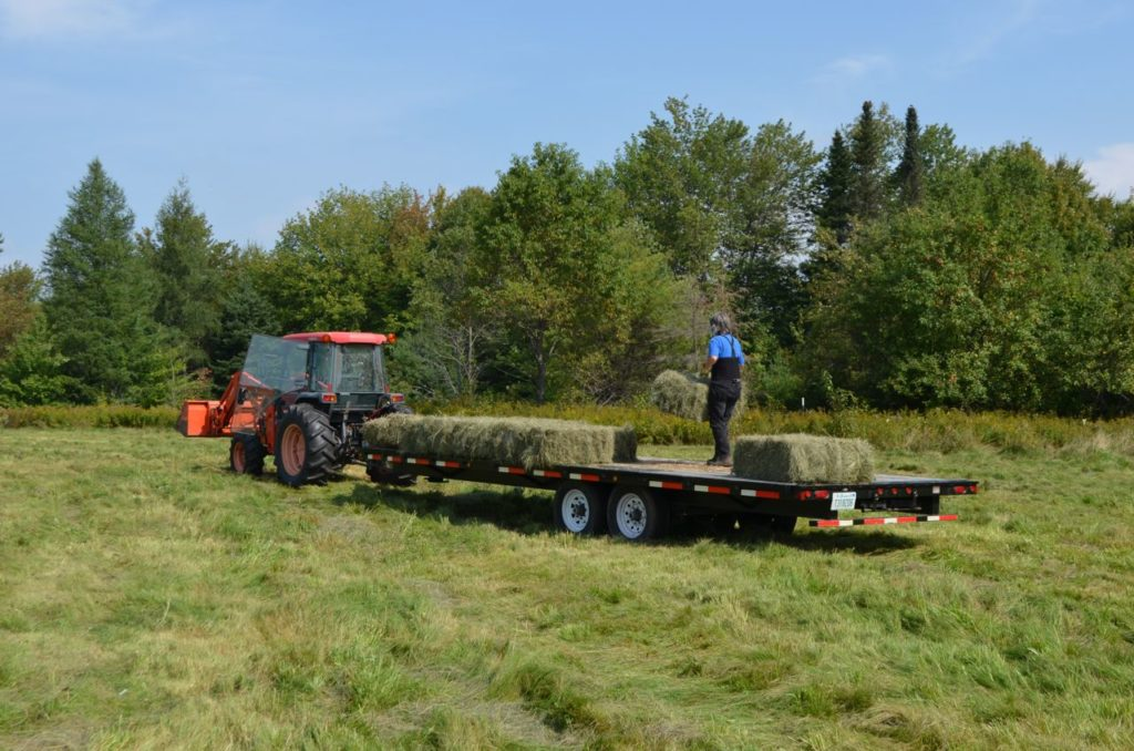 Alayne on hay trailer