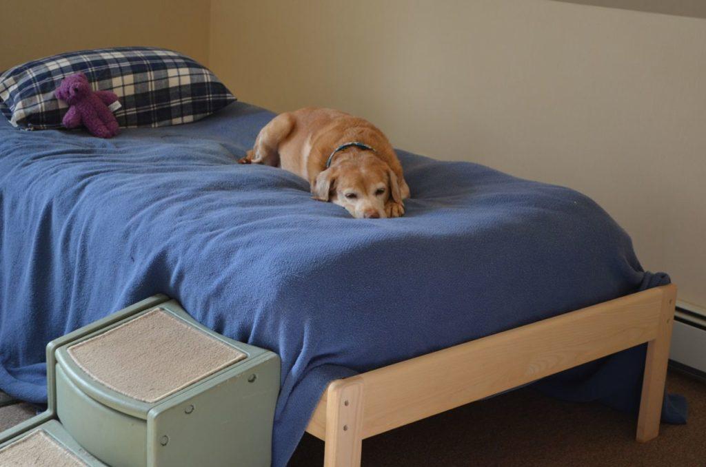 Darla on bed Nov 16