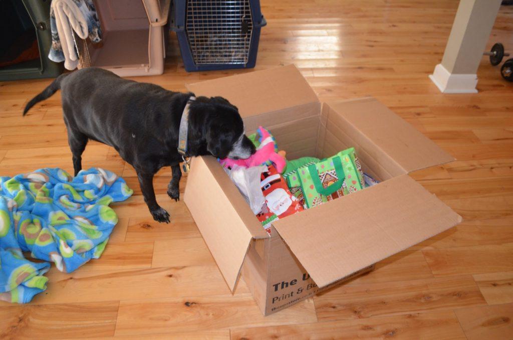 Stella with box 2