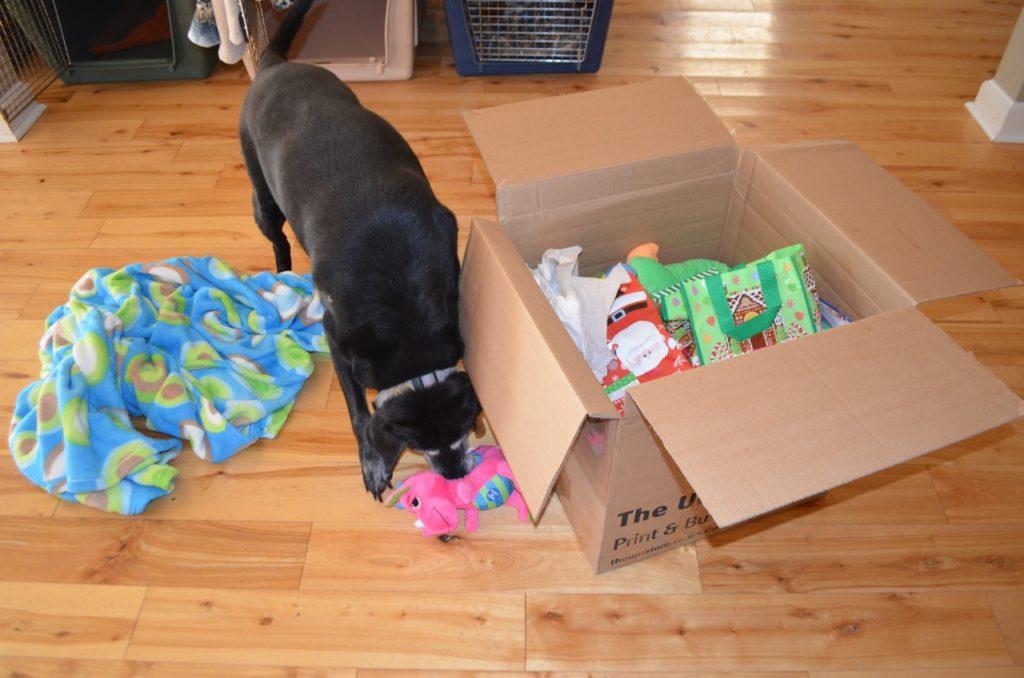 Stella with box 3