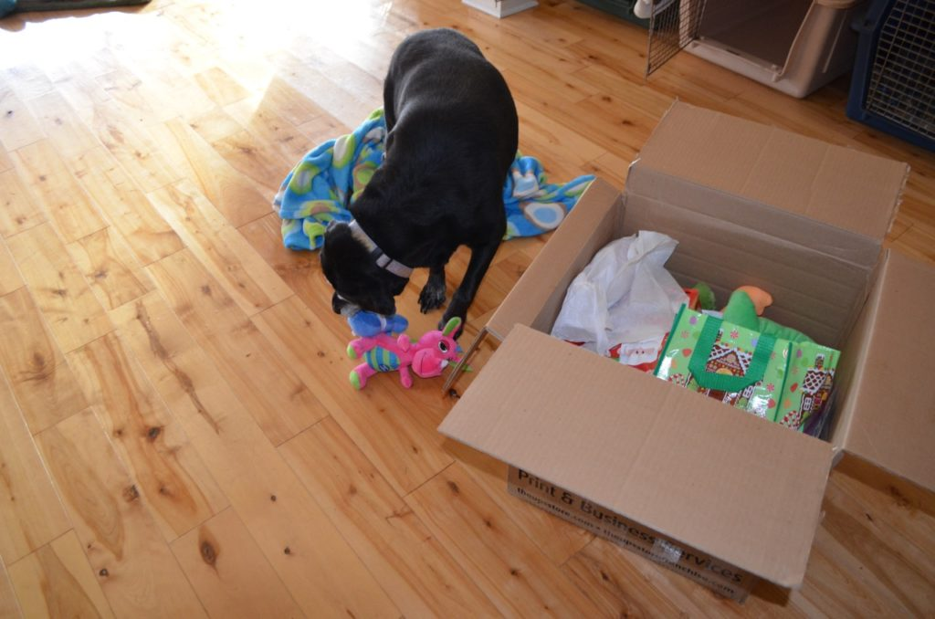 Stella with box 4