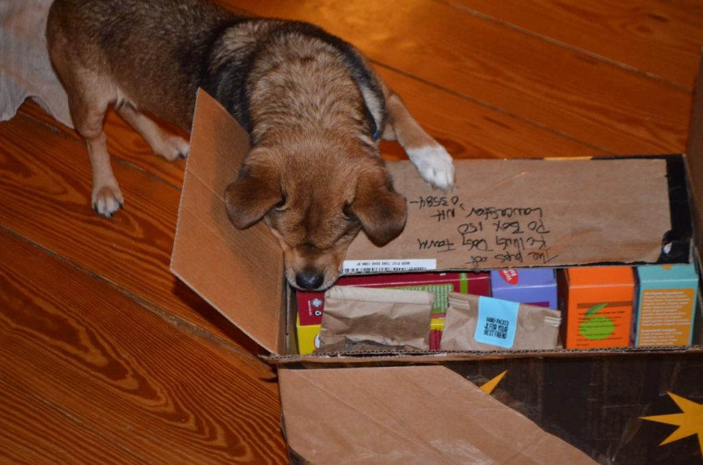 Bugsy with presents 1