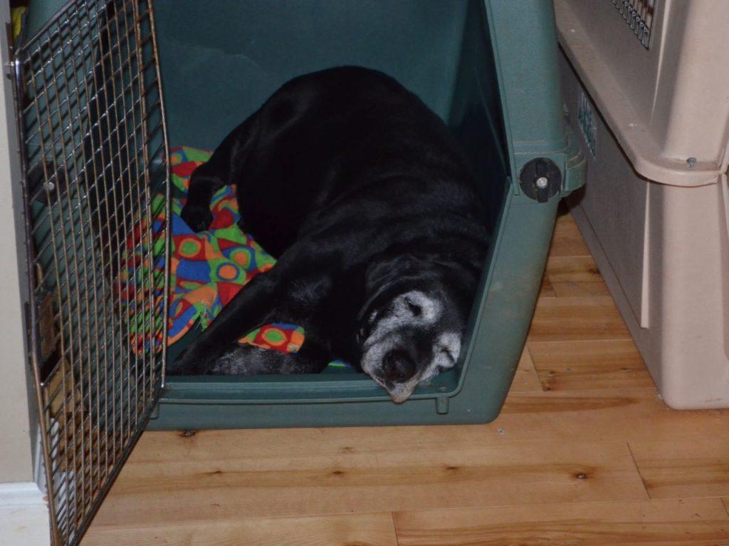 Stella in crate 1