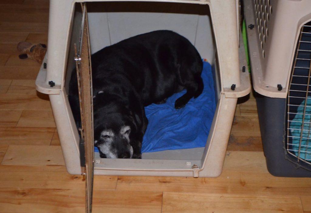 Stella in crate 2