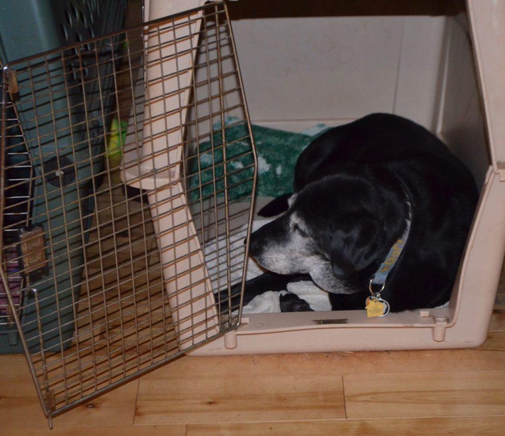 Stella in crate 4