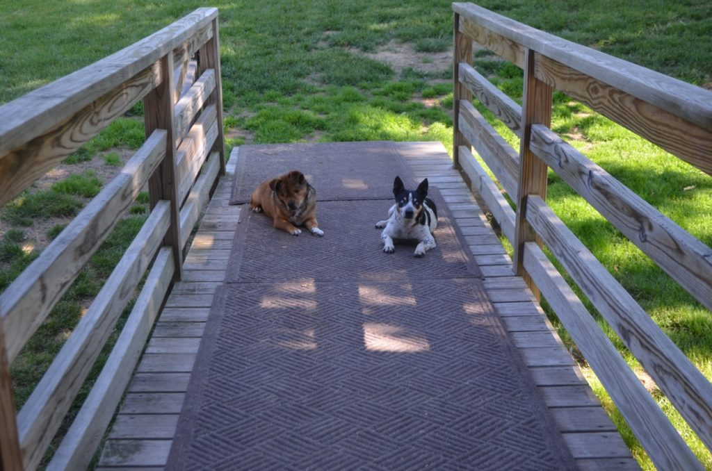Bugsy and Taco on ramp