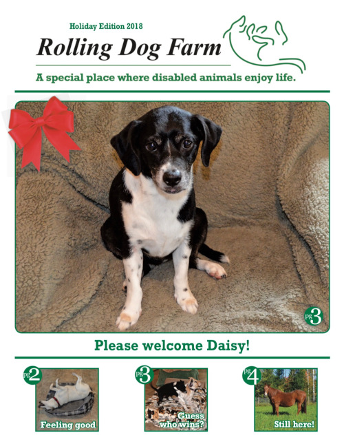 Rolling Dog Farm Winter/Holiday 2017 Newsletter