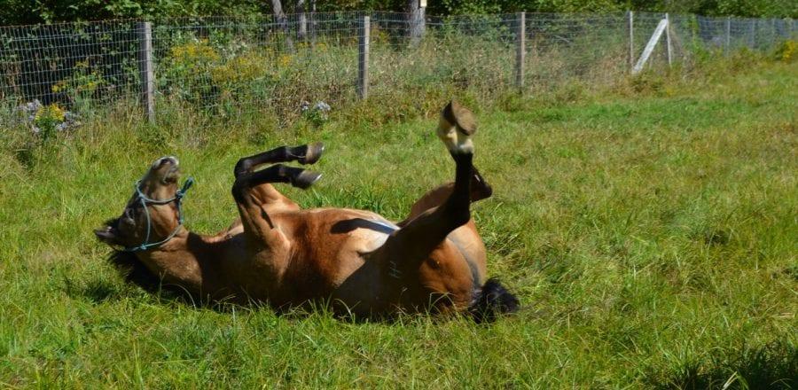 Rolling Horses